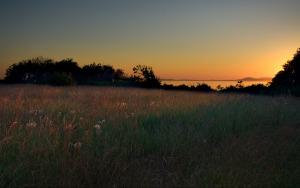 Meadow-Dawn